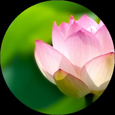 メンタルケアヨガ(心のためのヨガ)指導者養成コース
