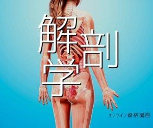 ヨガ解剖学〜ALL オンライン資格講座〜
